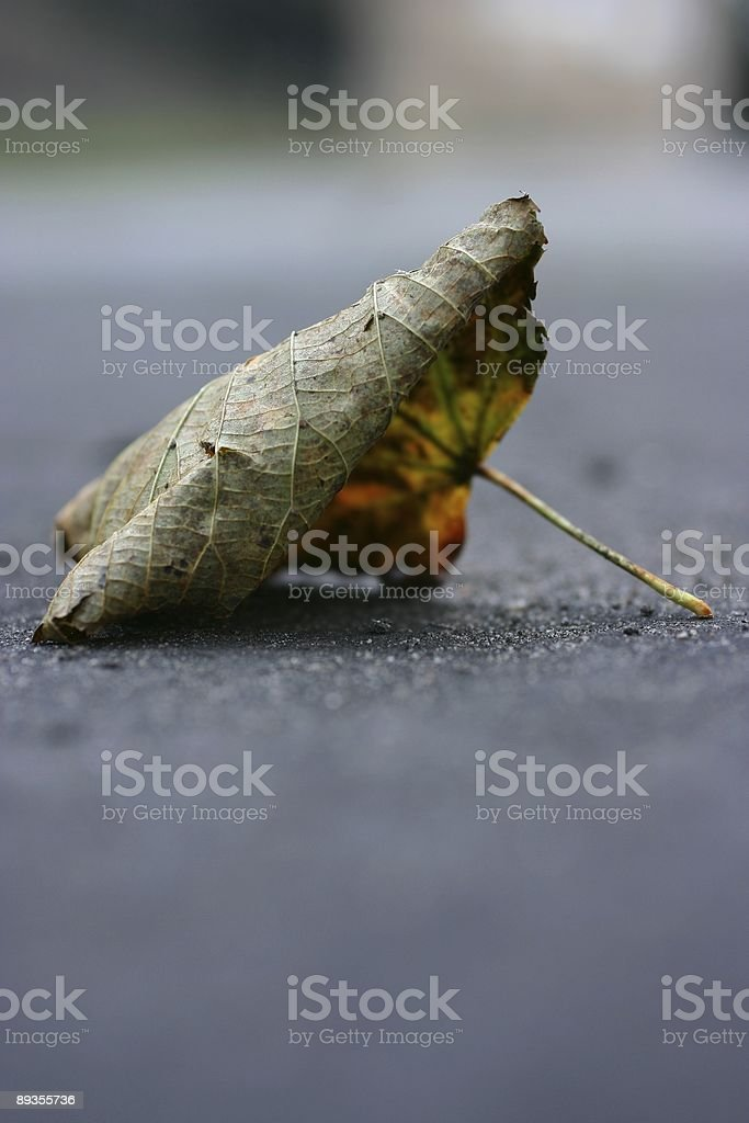 fallen leaf  on a pavement royalty free stockfoto