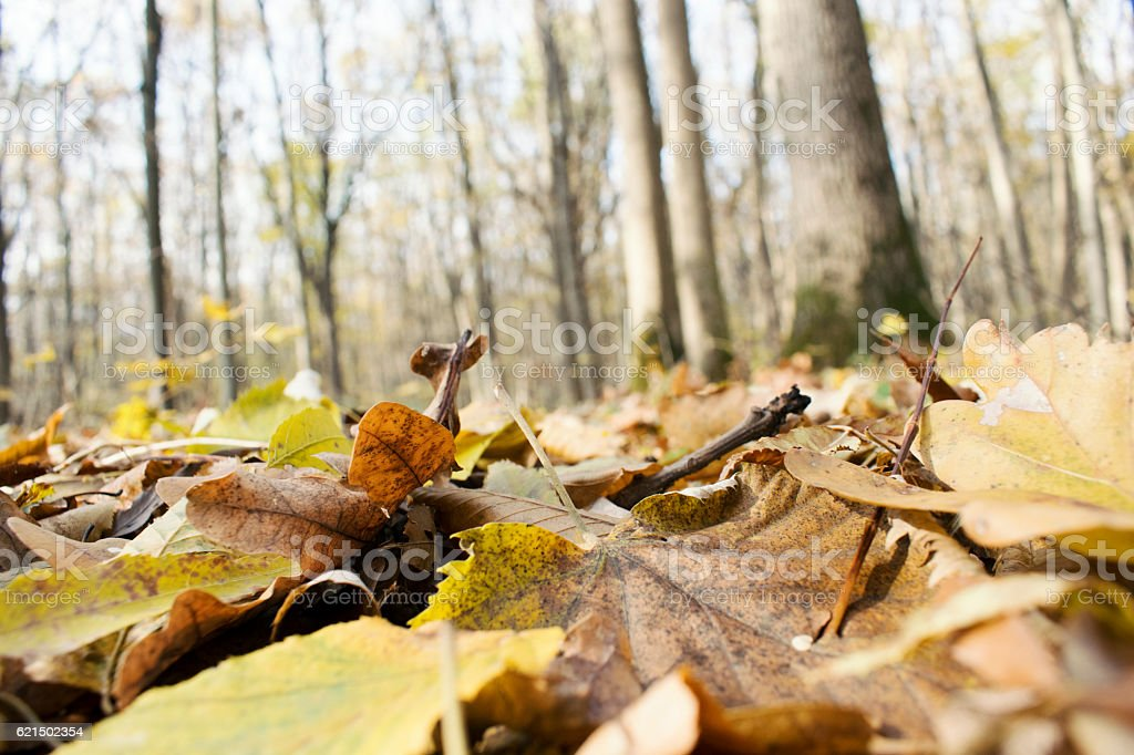 Fallen Leafs and Trees, Fall Background, Autumn foto stock royalty-free