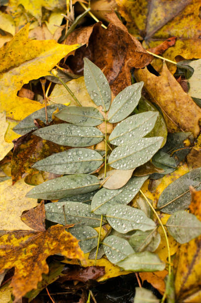Fallen leave with water drops after the rain stock photo