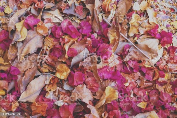 Fallen leaves and dry rose petals background picture id1124786124?b=1&k=6&m=1124786124&s=612x612&h=kn5drbkaeexpc4hlrdxodj8ubayv98zc3kvoxdwgb9s=