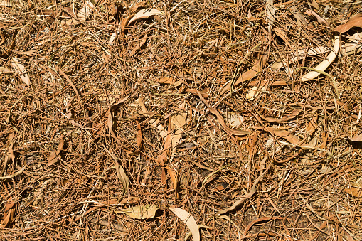Fallen leaves and pine needles on the ground