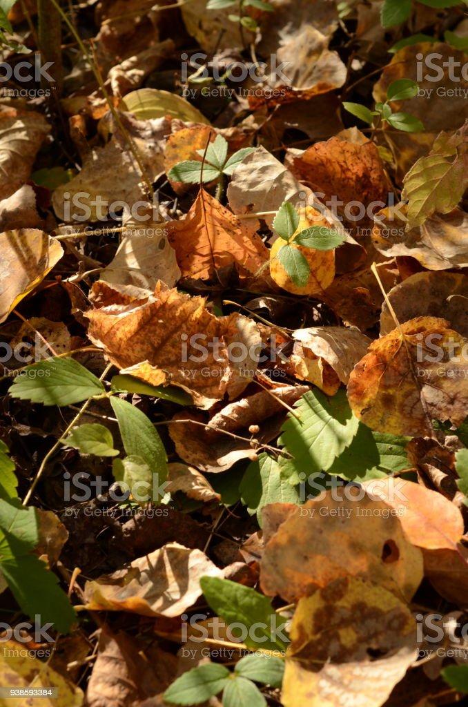Fallen Leaves Closeup stock photo