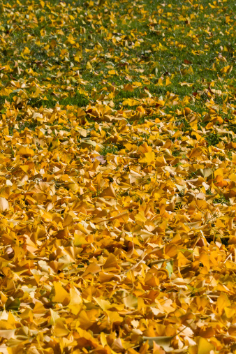 Fallen Leaves Fall - Hojas Caidas de Otoño