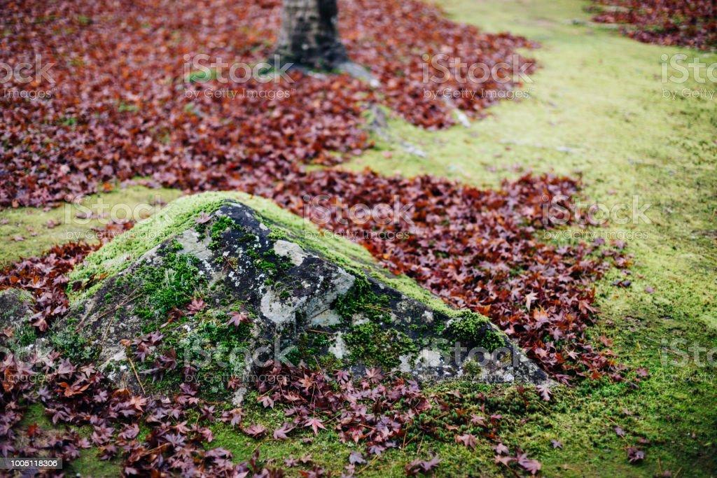 Fallen leaves in Kyoto, Japan - foto stock