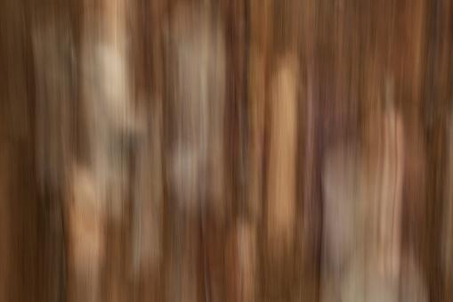 떨어진된 잎 바닥에 누워 추상 모션 흐림 효과 0명에 대한 스톡 사진 및 기타 이미지