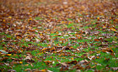 草の葉に降り注ぐ