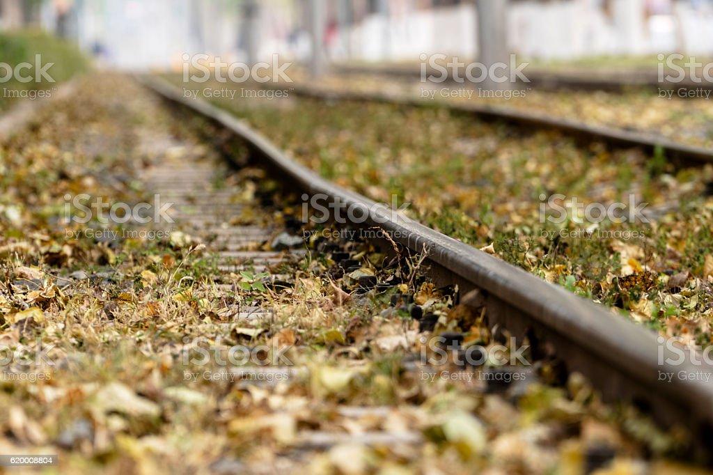 fallen leaves on lightrail track zbiór zdjęć royalty-free