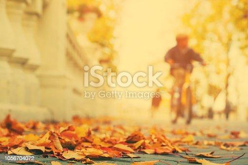 istock Fallen leaves on sidewalk in city park 1056704072