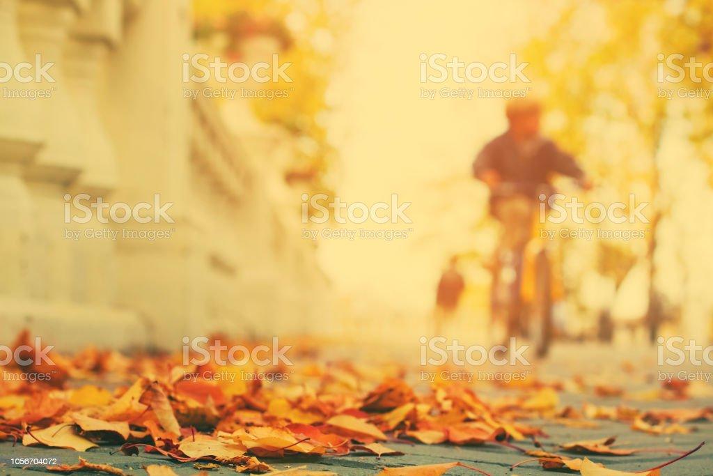 Fallen leaves on sidewalk in city park stock photo