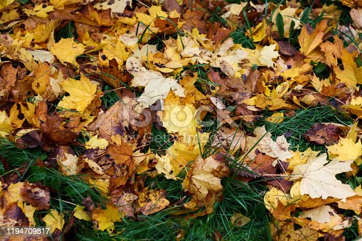 Fallen leaves on the grass of the park in autumn