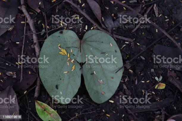 Photo of Fallen leaves on the ground wallpaper