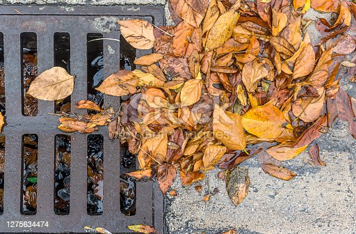 Storm drain partially blocked by fallen leaves on a rainy day.