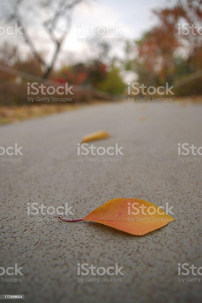 hojas caídas foto de stock libre de derechos
