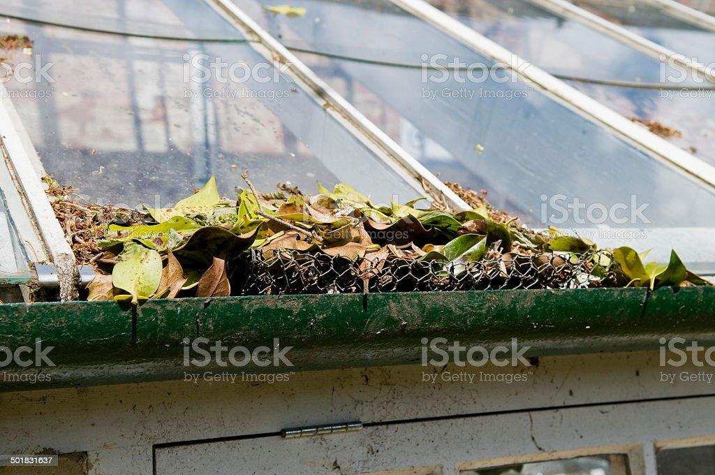 Fallen Blätter – Foto