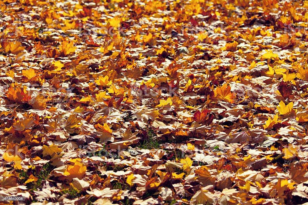 Fallen Leaves stock photo