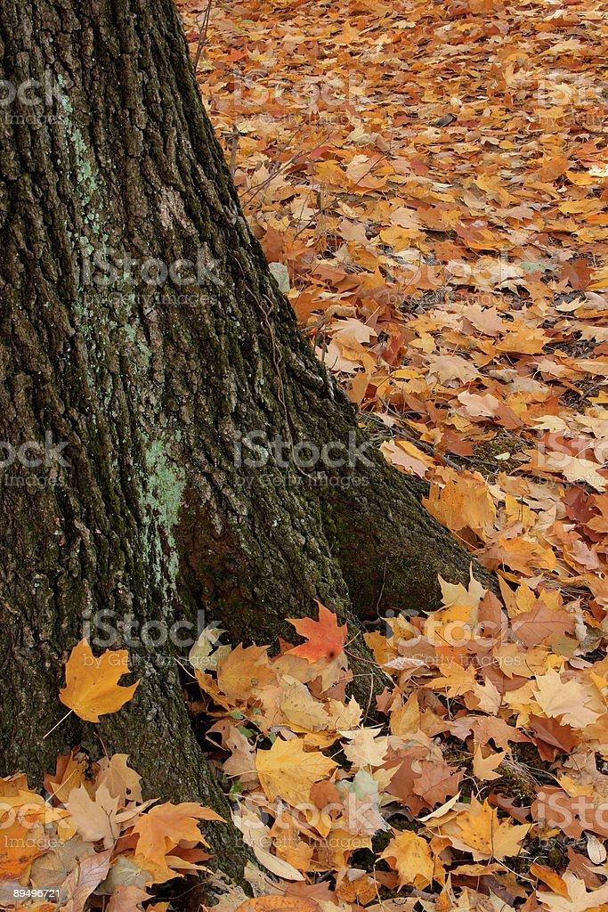 Caduto foglie foto stock royalty-free