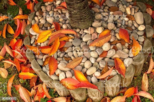 Photo of Fallen leaves