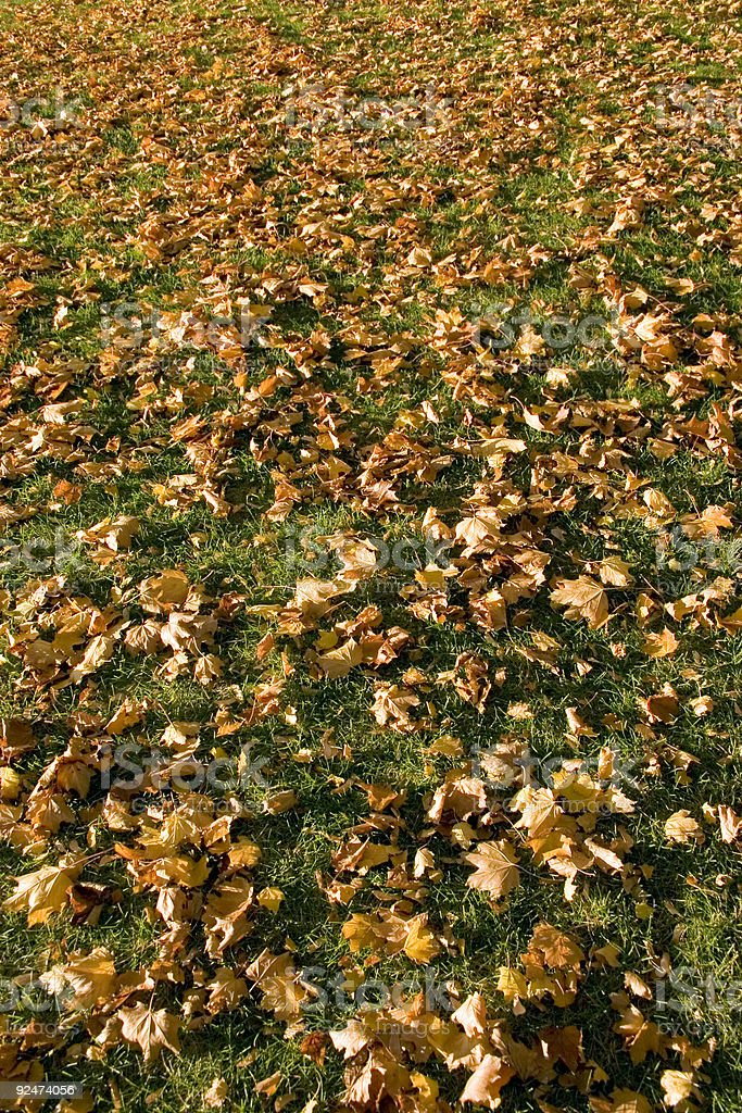 Fallen Leaves royalty-free stock photo