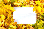 Fallen leaves, white sheet of paper lies on fallen leaves. The concept of autumn