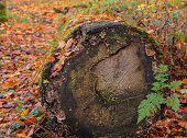 istock Fallen log in the woods. 1284598439
