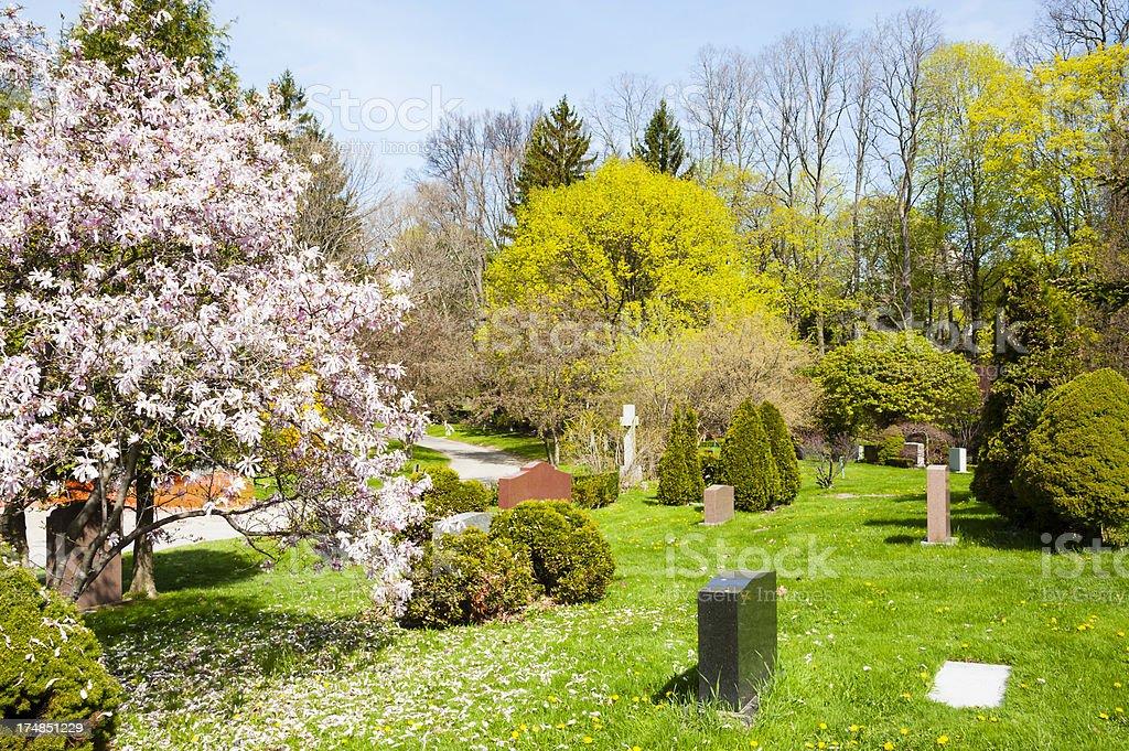 Fallen Magnolia Petals royalty-free stock photo
