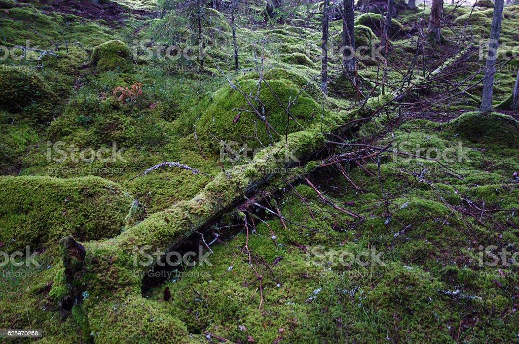 Fallen mossy tree trunk stock photo