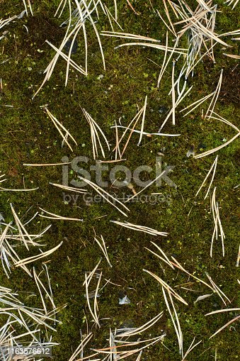 Fallen needles and moss, forest background