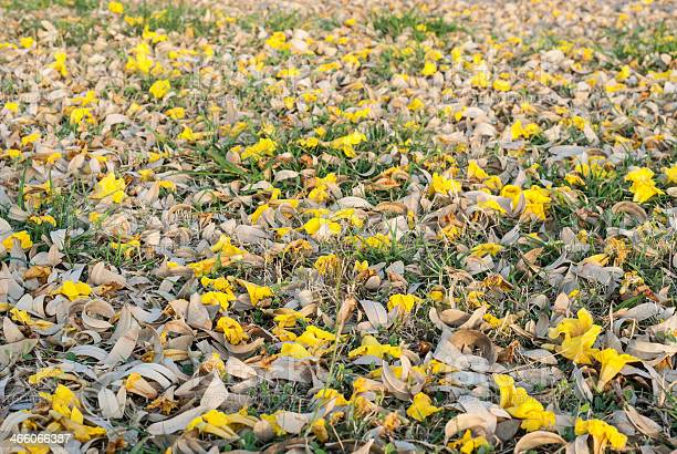 Fallen petals on ground picture id466066387?b=1&k=6&m=466066387&s=612x612&h=mplcmz8pcdv6ohqpl8x6rt3z4hk4ftwu6zitv ski0c=