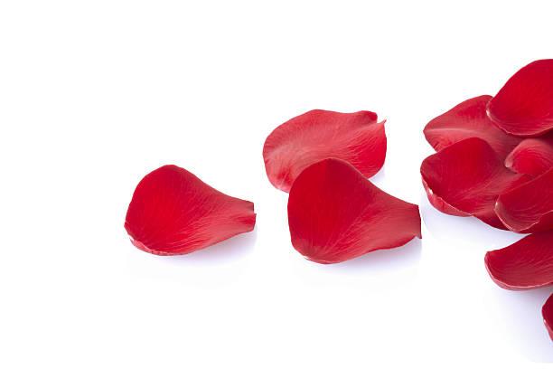 Fallen petals picture id110954351?b=1&k=6&m=110954351&s=612x612&w=0&h=wj7a 5umn6jb2xdxh49neofxb3u2bretesv0jdxrtae=