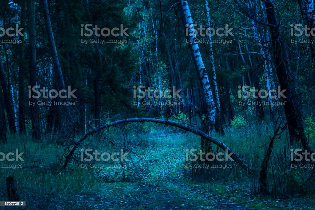 fallen pine arched arched in a mysterious night forest stock photo