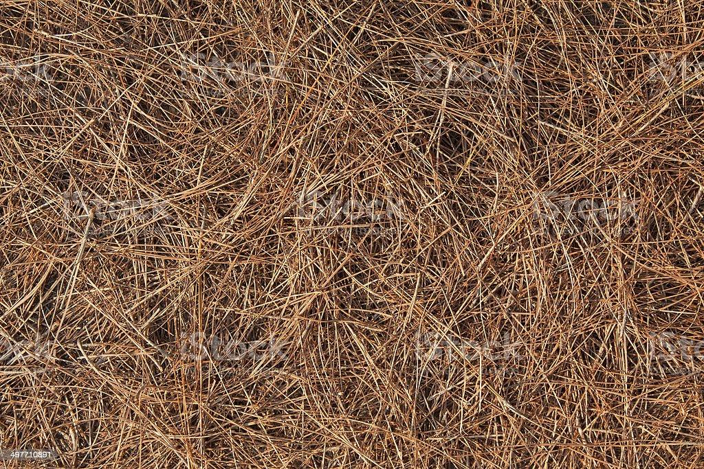 Fallen pine needles stock photo