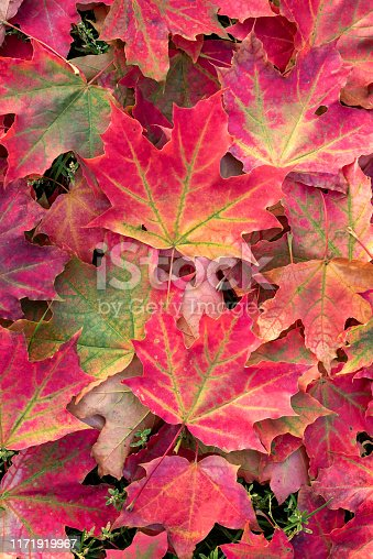 Beautiful leaves lie on the grass