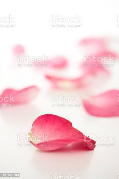 Fallen rose petals picture id157399780?b=1&k=6&m=157399780&s=612x612&h=sav9fs7tezd68rym2vxj3fwhaczsafgl470nxl7rovs=
