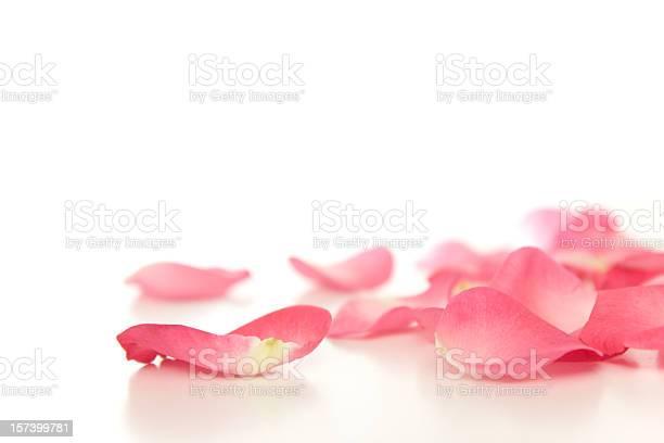 Fallen rose petals picture id157399781?b=1&k=6&m=157399781&s=612x612&h=uk4ukhdqmlkjfbpjk0sjze3wvfzj7br4fvpj8srnowy=