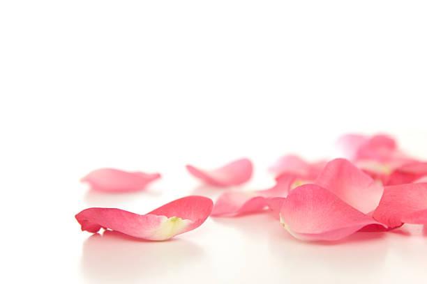 Fallen rose petals picture id157399781?b=1&k=6&m=157399781&s=612x612&w=0&h=9kconnecvmivovtoqn4yfq ktrvacce5puhz5k9ex9y=