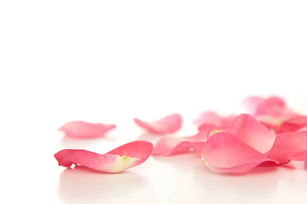 fallen rose petals - rose petals stock pictures, royalty-free photos & images