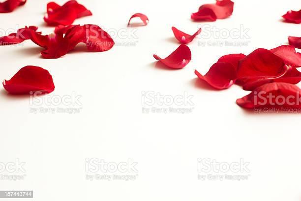 Fallen rose petals picture id157443744?b=1&k=6&m=157443744&s=612x612&h=rzmvysvjlml30pomvvonxdhvio2bqogitcxwprjzusm=