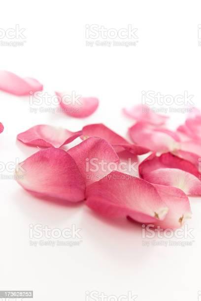 Fallen rose petals picture id173628253?b=1&k=6&m=173628253&s=612x612&h=9r7ir37a1gefws001nlitthokjnqy7tvohj8e6trmj0=
