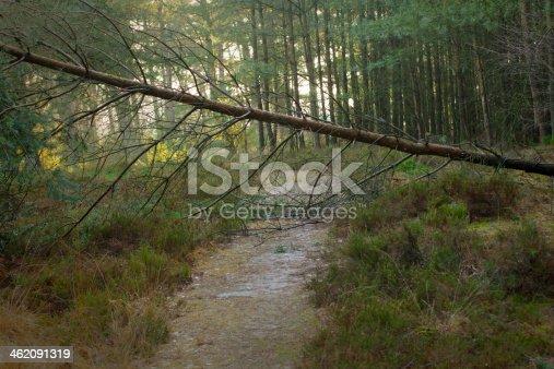 istock Fallen tree above foothpath 462091319