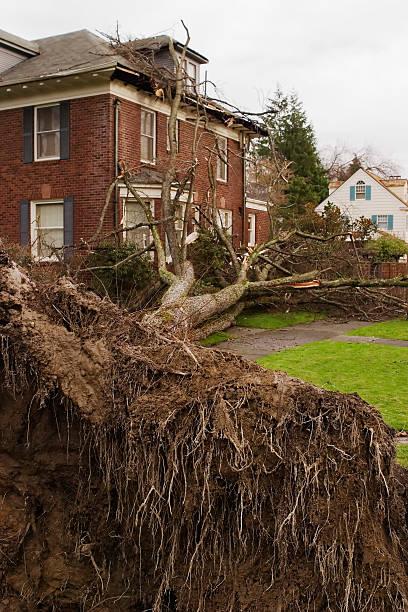 Baumstamm am Boden und House – Foto