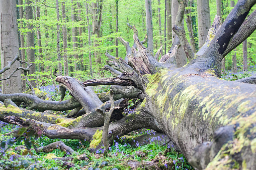 fallen tree at the Spring Forest Background