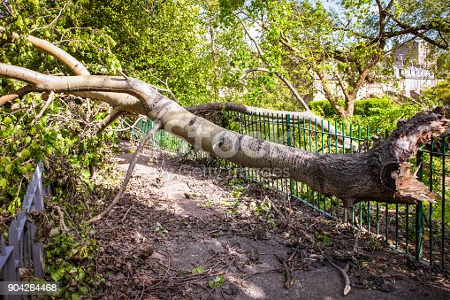 istock Fallen tree blocking a path after a storm 904264468
