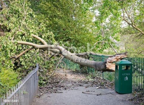 istock Fallen Tree Blocking a Path 165615491