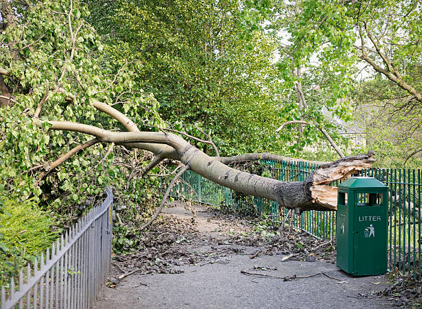 Fallen Tree Blocking a Path A large fallen tree blocking access to a path following a storm. fallen tree stock pictures, royalty-free photos & images