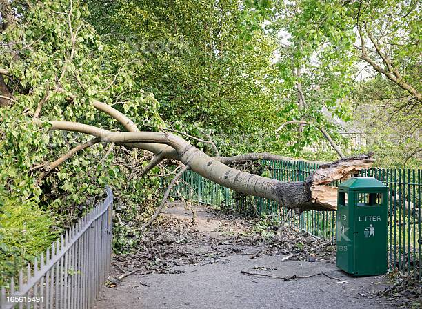 Photo of Fallen Tree Blocking a Path