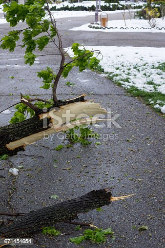 istock Fallen Tree Blocking Alley 671454654