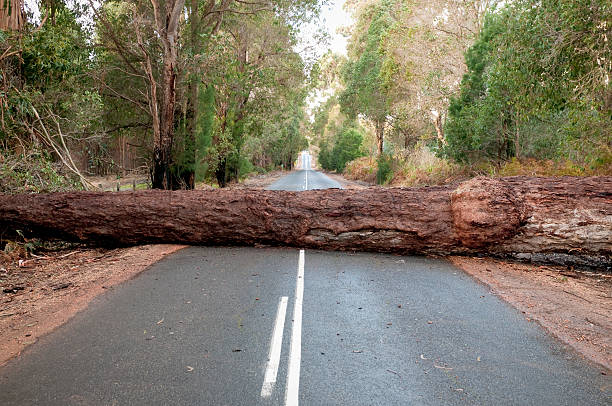 fallen tree blocking road - impaired driving stock photos and pictures