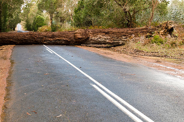 Fallen Tree Blocking the Road A large tree blocks a main road.  fallen tree stock pictures, royalty-free photos & images