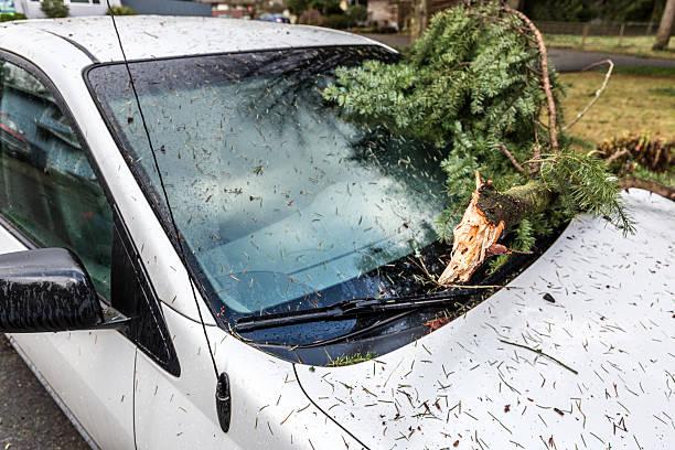 Fallen Tree Branch Damages Auto – Foto
