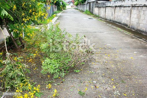 istock Fallen tree branches blocked the road background. Cut tree fall on street in the village 1284517312